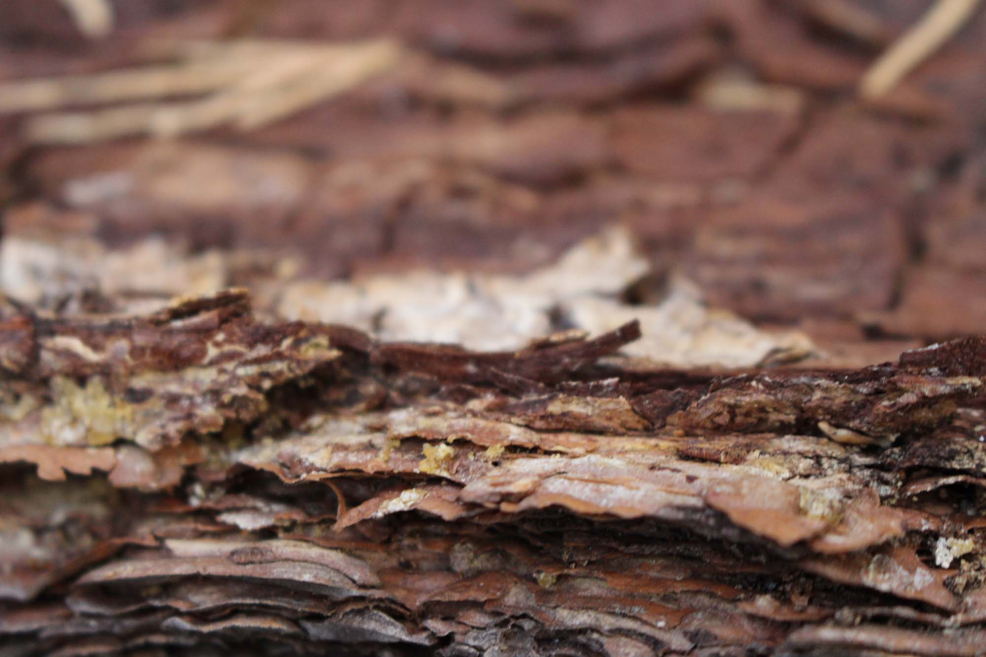 Have you ever looked REALLY closely at tree bark?