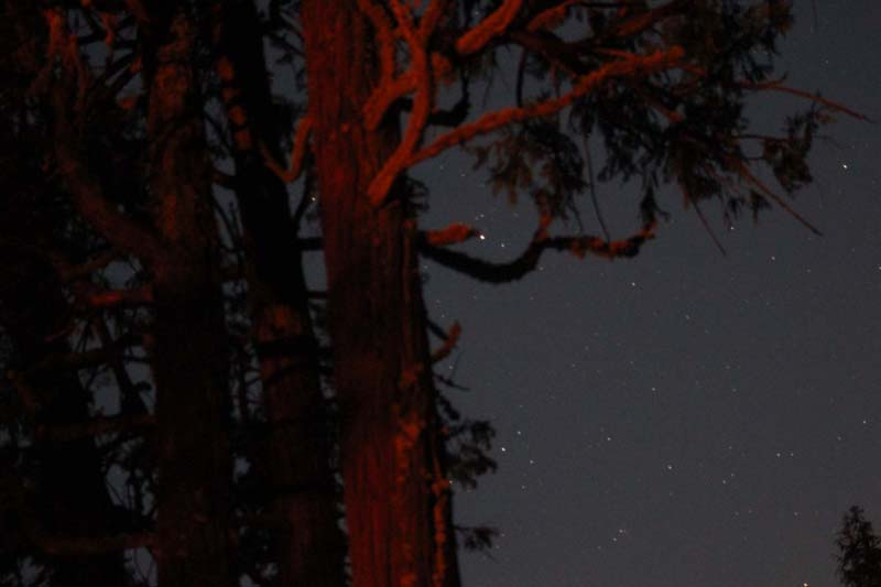 The stars at night and a tree lit by the fire
