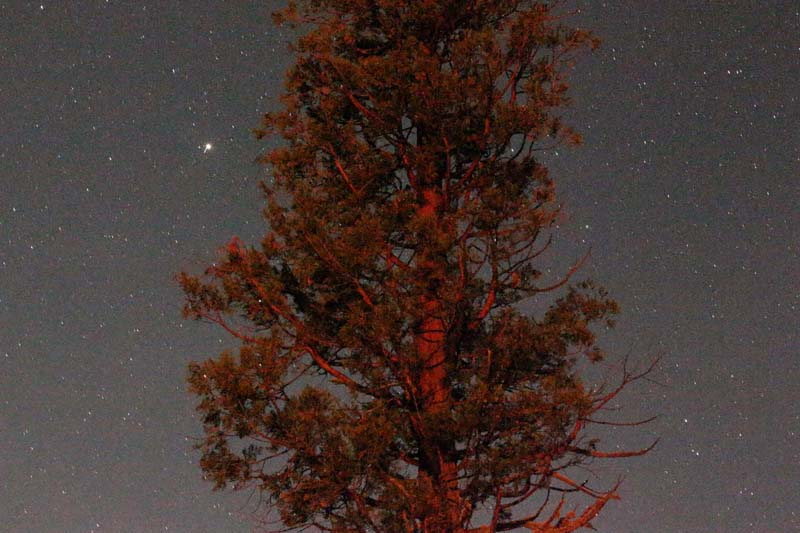 Tree lit red by the light of the campfire with stars behind