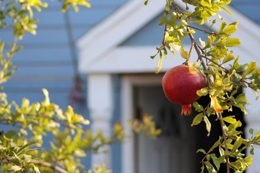 Pomegranate in front of an open cottage
