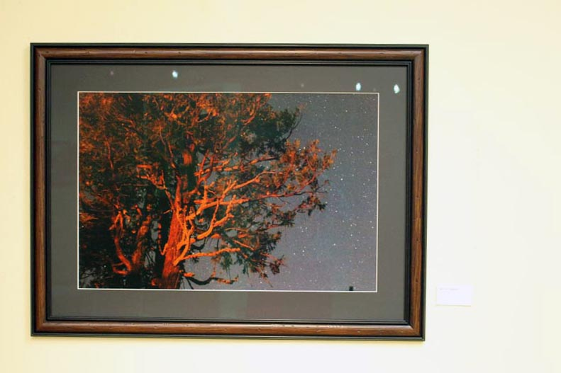 'Tree by campfire' hung in the Kings Art Center Gallery